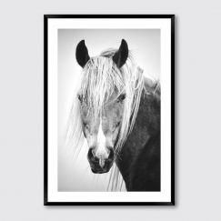Horse Beauty #2 | Framed Giclee Art Print
