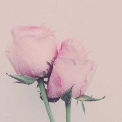 Karen Tonna   Twin Roses   Unframed Print
