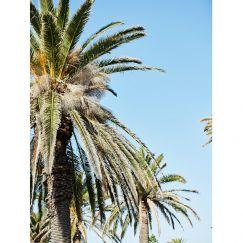Kilda Palms   Photographic Print by Kristoffer Paulsen