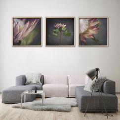King on Gray | Set of 3 Art Prints | Framed or Unframed