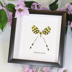 Lacewing Wall Hanging | Framed | by Bits'n Bugs