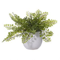 Maiden Hair In Tub Pot Artificial Plant | PREORDER | Interior Secrets