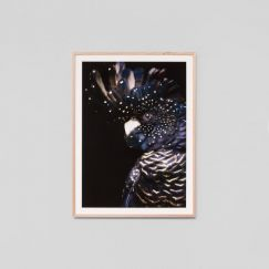 Midnight Cockatoo | Framed Print