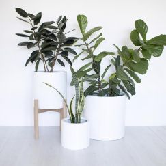 Naked | Indoor & Outdoor Planter Pot