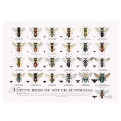 Native Bees of South Australia Poster
