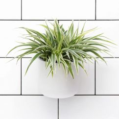 Okidome Suction Planter | CLU Living