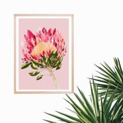 Protea Party | Pink | Art Print by Grotti Lotti