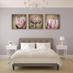 Protea Still | Set of 3 Art prints | Framed or Unframed