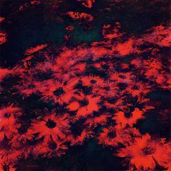 Spring Garden No 5 | Lightbox + Artwork | Various Sizes