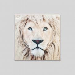 Winter Lion | Framed Canvas Print