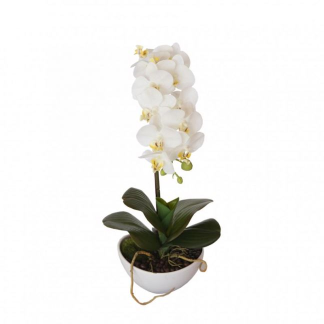 46cm Butterfly Orchid | White