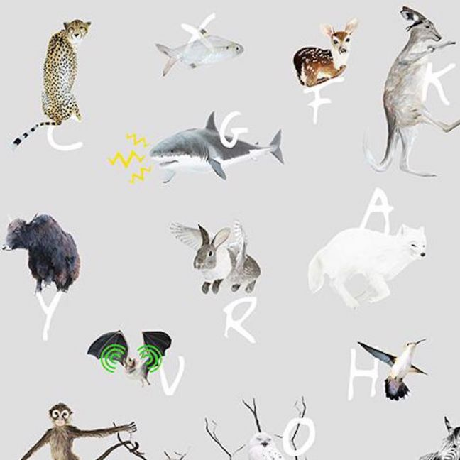 A to Z Animal Wallpaper - Grey