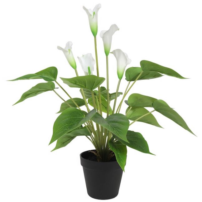 Artificial Flowering White Peace Lily/Calla Lily | 50cm