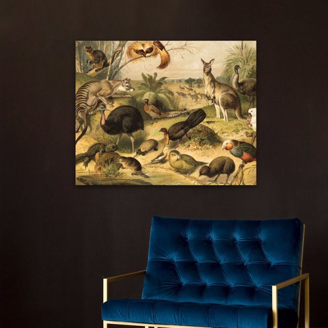 Australian Flora & Fauna Lithograph   Stretched Canvas   Printed Panel
