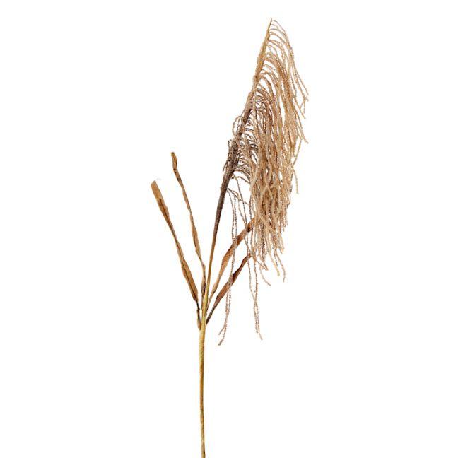 Dried Wheat Spray x 12 stems