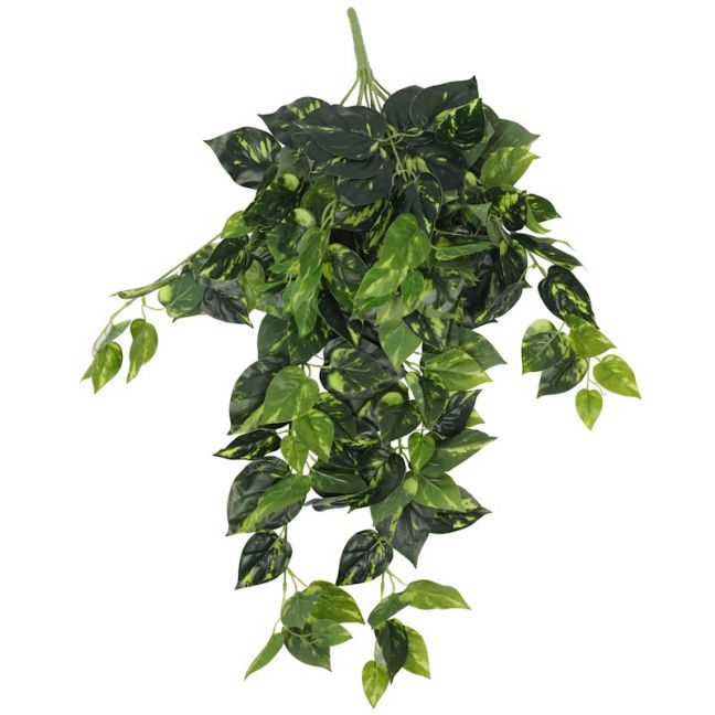 Heart Leaf Philodendron Hanging Creeper Bush 78cm
