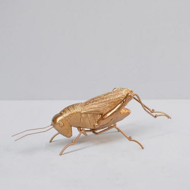 Insect | Grasshopper | Gold | White Moose