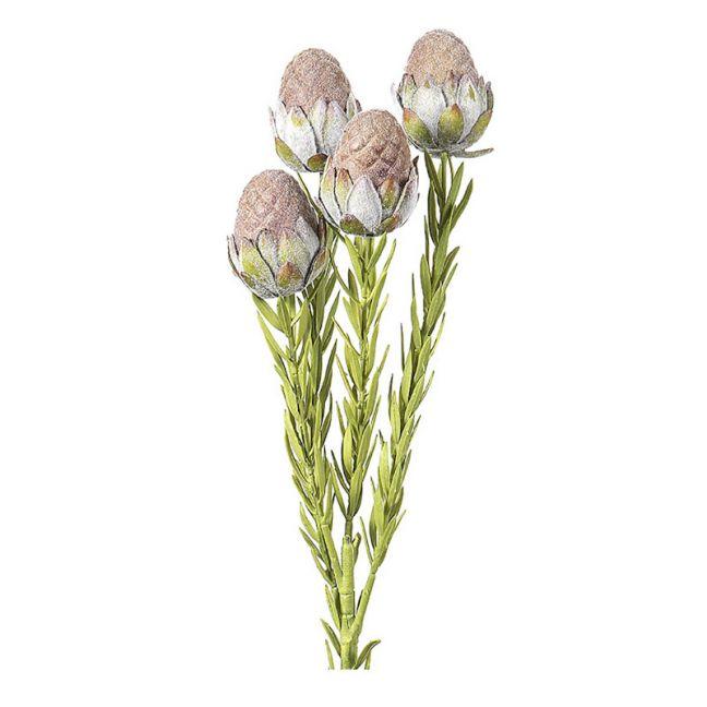 Leucadendron Plant   Brown - 12 Stems