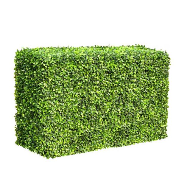 Mixed Boxwood Hedge | UV Resistant | 50cm x 100cm