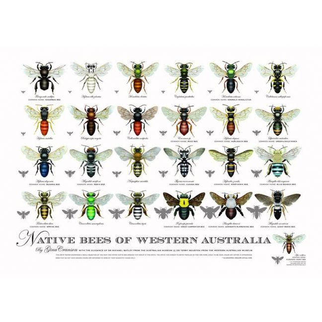 Native Bees of Western Australia Poster