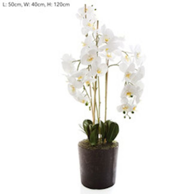 Orchid in Paper Pot   White