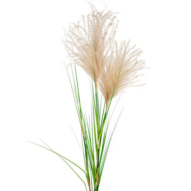 Pampas Grass Spray x 12 stems