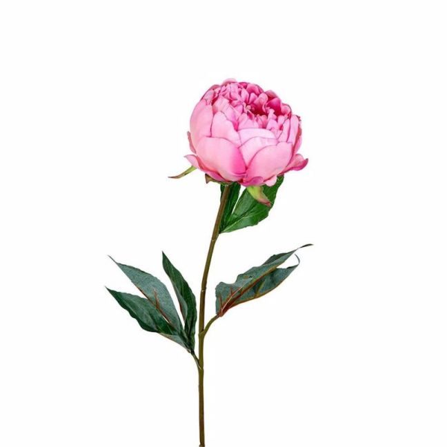 Peony   Half Open 3 Leaves   2 Tone Pink - 12 Stems
