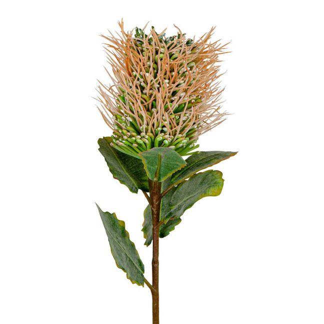 Pincushion Native Flower | Pink - 12 Stems