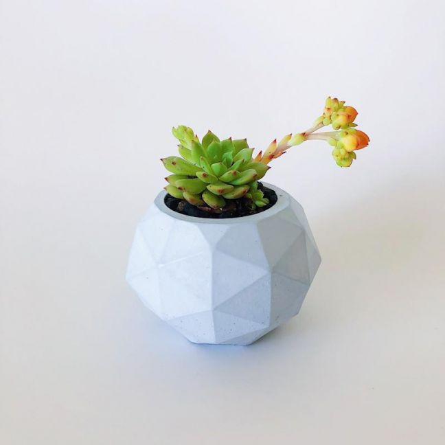Planter | Clover | Pastel Blue | by Coral and Herb