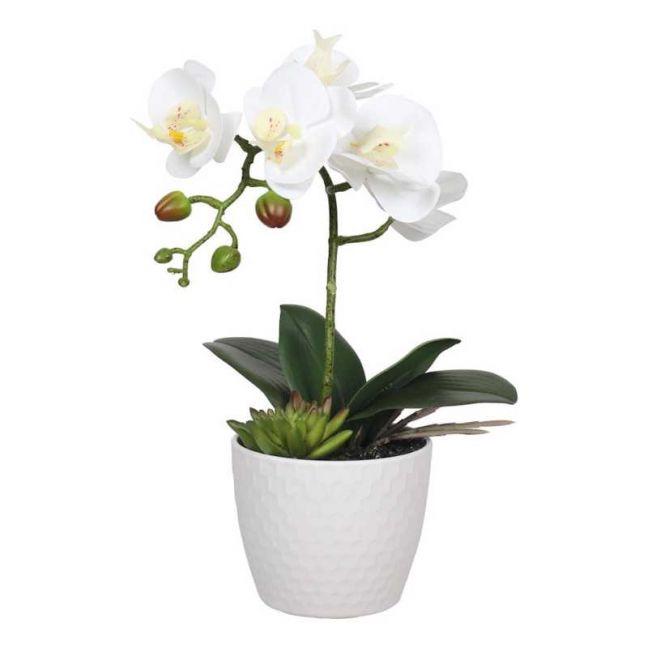 Potted White Phalaenopsis Orchid | Decorative Pot | 35cm