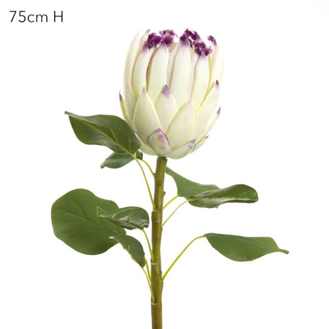 Protea Spray Cream (75cm)
