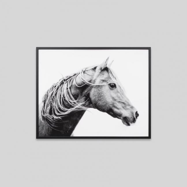 Roaming Brumby | Framed Photographic Print