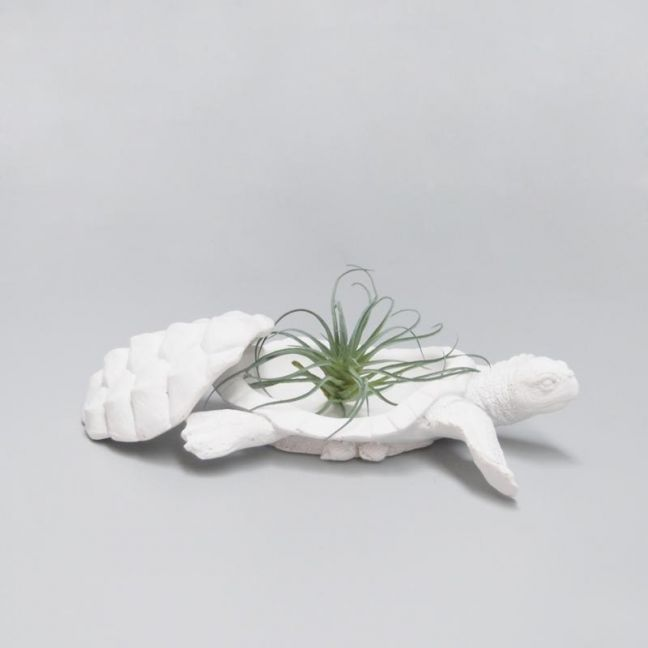 Secret Turtle Bowl | White