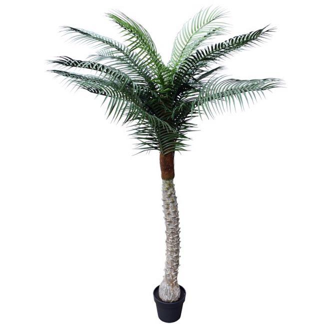 Tropical Phoenix Palm Tree | 170cm | UV Resistant