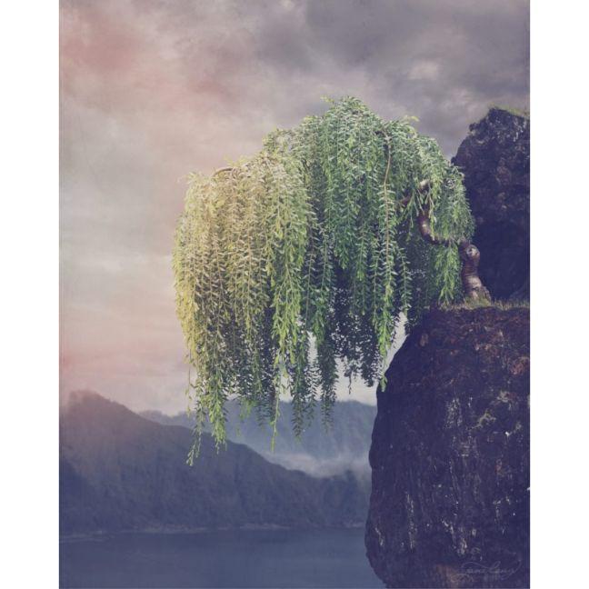Wild Bonsai | Sticky Wattle by Jane Long | Fine Art Photography | Art Lovers Australia